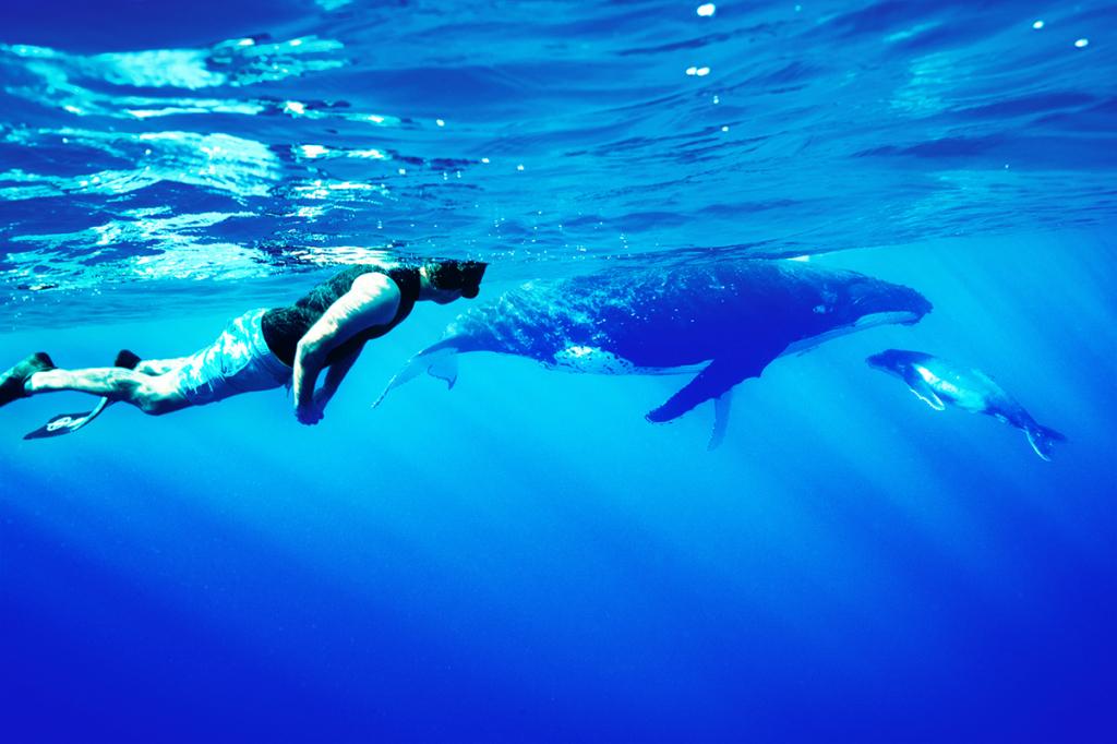 Niue1_Whales_WFL_8823-China
